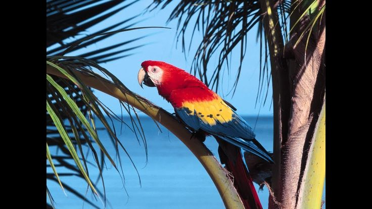 The amazing parrots in the jungle