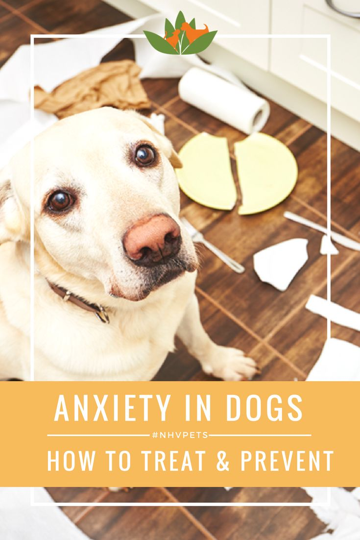Best 25+ Dog anxiety ideas on Pinterest | Dogs with ...