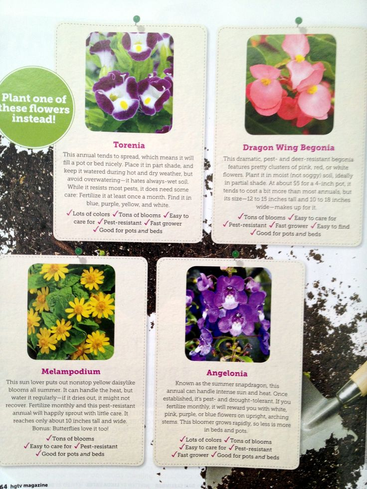 #EasyCare #flowers to plant from @HGTV magazine.