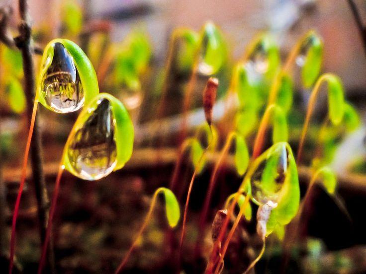 10 posibles causas de tener una planta enferma - http://decoracionyjardines.com/planta-enferma-causas/9696