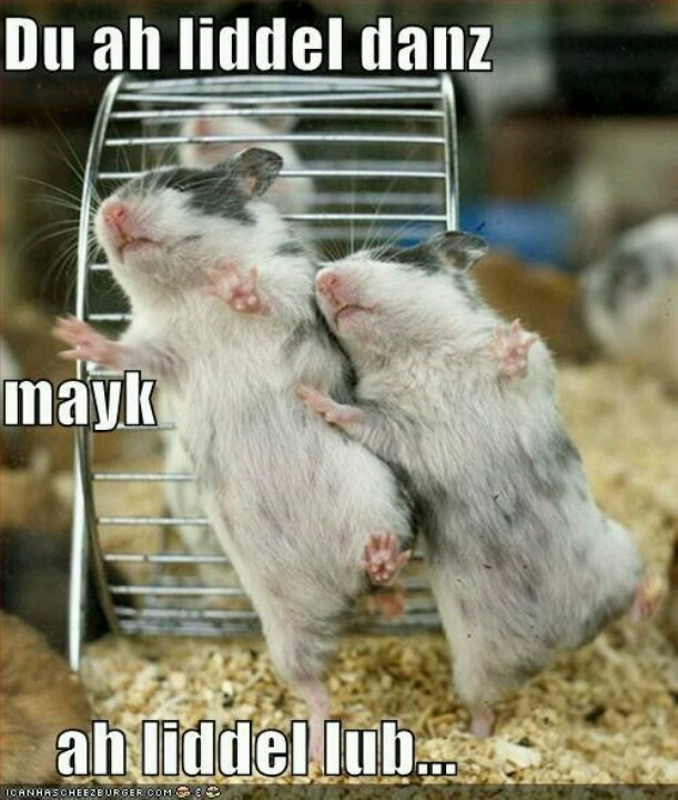 Get down tonight! Funny hamsters, Dancing animals, Funny