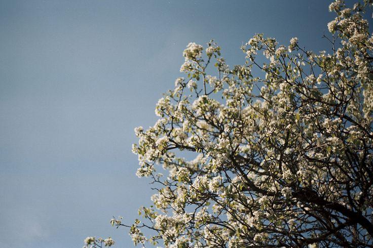 Credo che la bellezza sia una cosa semplice — Miriam Callegari