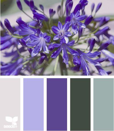 color.Flower Tone, Quilt Inspiration, Colors Palettes, Colors Combinations, Master Bedrooms, Colors Schemes, Blue Flower, Color, Colors Inspiration
