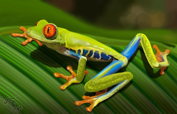 Red eyed tree Frog by Grifforik on deviantART