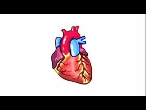 Bouw en werking van het hart met filmpje