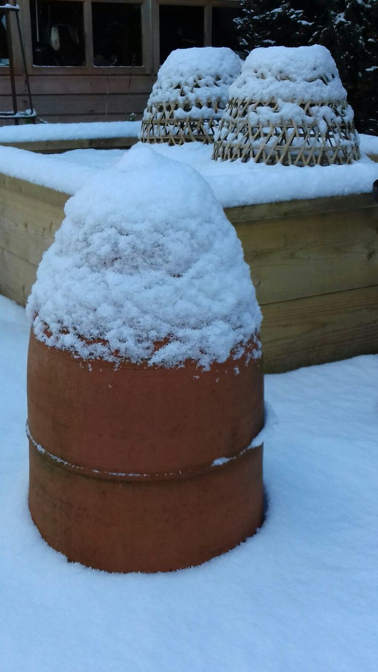 11 best Snowy pictures from the Kitchen Garden images on Pinterest