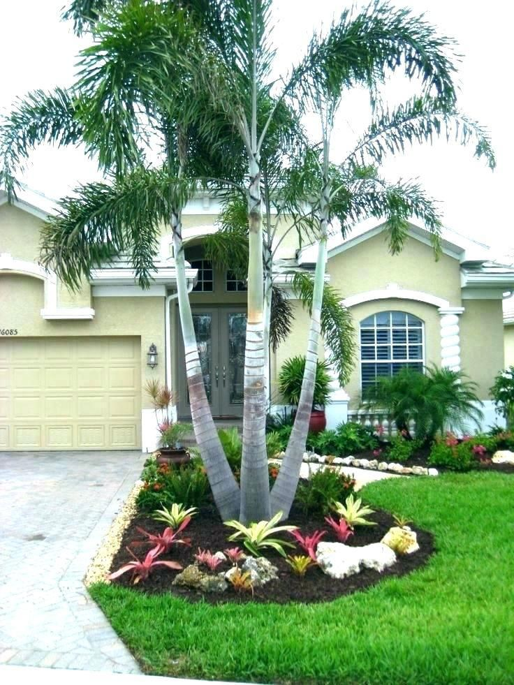 Palm Trees For The Front Yard Palm Tree Landscaping Ideas Front