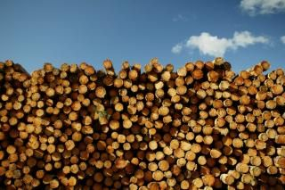 Victoria leads logging of native forests