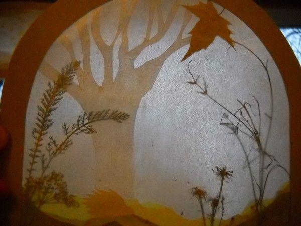 Transparent mit Gräsern