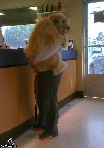 Dog isn't thrilled to be at the vet. This kills me!