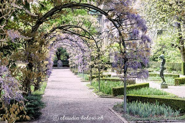 Glyzine Blauregen Im Belvoirpark Zurich Foto Claudia Below Fotografie Bildbearbeitung Bilder