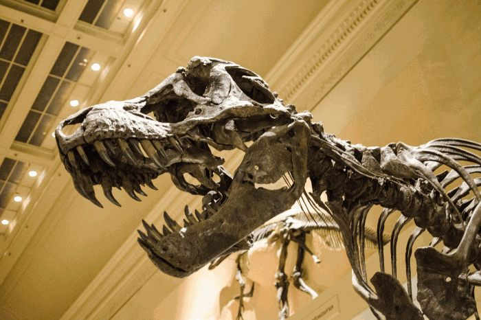 Trivial Discourse - dinosaur revolution