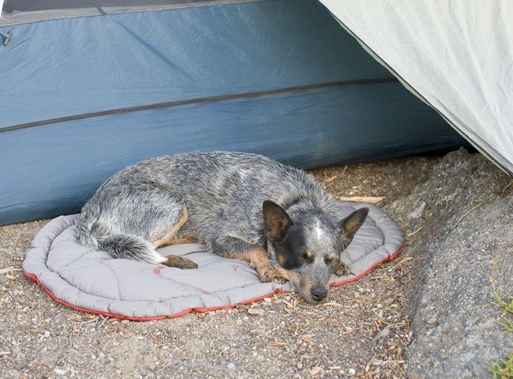 22 best My Next Dog images on Pinterest | German shepherd ...