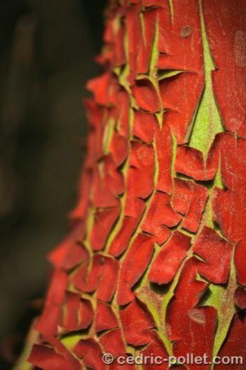 17 meilleures id es propos de corce d arbre sur pinterest ecorce ecorce de bois et texture. Black Bedroom Furniture Sets. Home Design Ideas