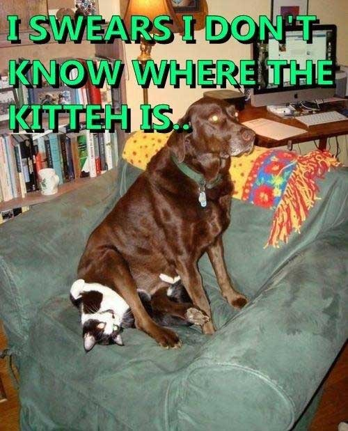 Here kitty, kitty, kitty...