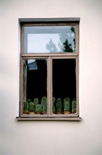 Des cactus rangés devant une fenêtre