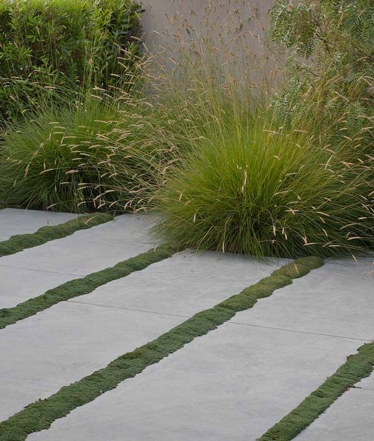 Concrete slabs with moss strips, can be replicated with mini Mondo grass. Pennisetum grass at the rear