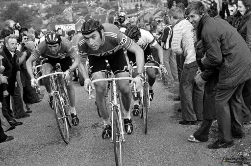 Roger de Vlaeminck, Eddy Merckx and Freddy Maertens in his historic battle of Tour des Flandres - Ronde van Vlaanderen 1977