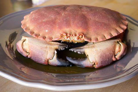 Cuisson du tourteau. Cuire un crabe au court-bouillon.. La recette par Chef…