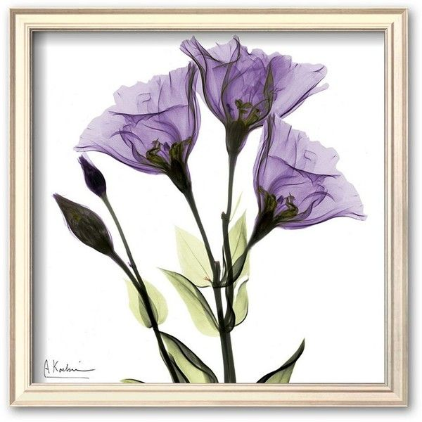 Art.com Gentian in Purple Framed Art Print by Albert Koetsier ($88) ❤ liked on Polyvore featuring home, home decor, wall art, champagne, wooden home decor, purple floral wall art, framed wall art, wood wall art and floral home decor
