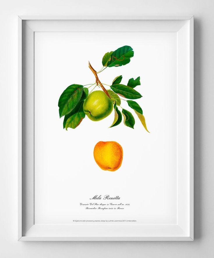 Botanical art print vintage antique old apple picture home kitchen wall decor #Vintage