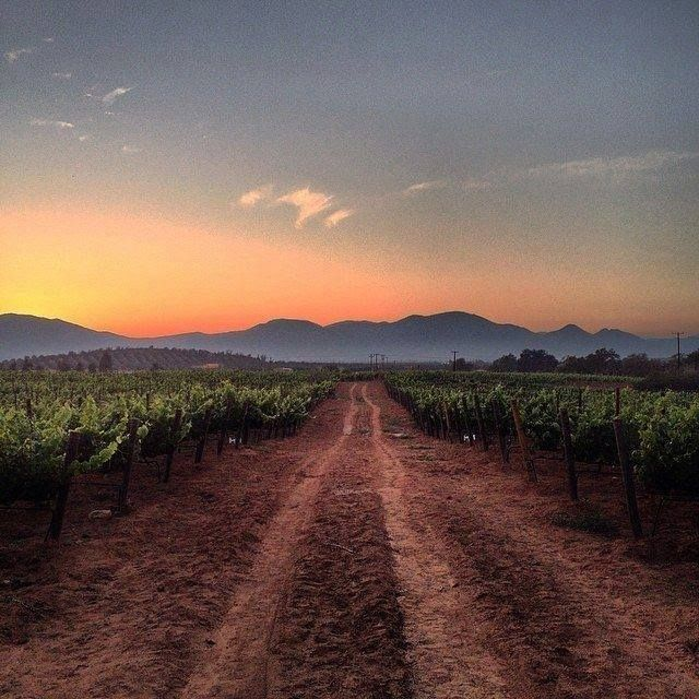 Landscapes that enchant and surprise, places surrounded by nature and beautiful vineyards... That's the Valle de Guadalupe, one of the most romantic places in #Ensenada #BajaCalifornia  Adventure by buckshotjohnn #love #instagood #photooftheday #tbt #beautiful #cute #me #happy #fashion #followme #follow #selfie #picoftheday #summer #friends #instadaily #girl #fun #tagforlikes #smile #PassportReady #ISeeFaces #RTW #TTOT #TravelAddict  #SinFiltros #NoFilter #BajaCalifornia #DiscoverBaja…