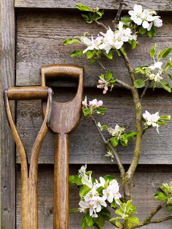 Spring: Time for planting