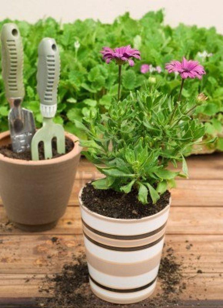 65 best plantas de interior images on pinterest indoor - Macetas de interior ...