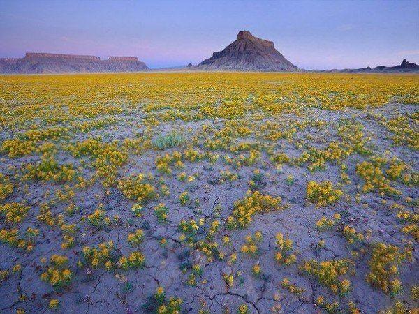 Бедленд (badlands) - бесплодные земли на американском западе, при благоприятном стечении обстоятельств наполняются необычайным обилием цветов.