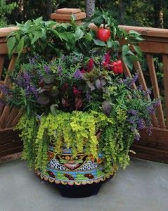 Grow peppers with pretty ornamental flowers and foliage in a container.