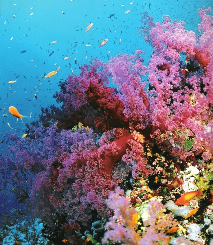 Snorkeling @ Great Barrier Reef.  Yes!! The corals are this colourful!!!