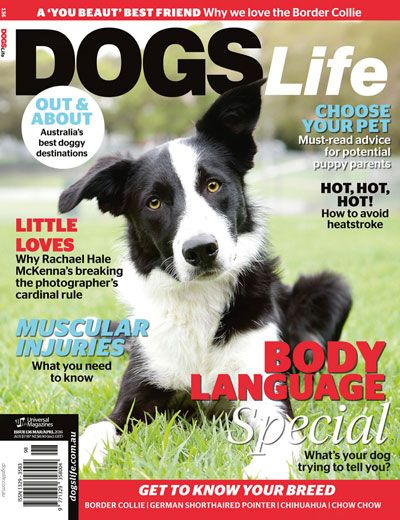 Our latest issue has hit the shelves! Get your paws on a copy at your local newsagent or online at http://www.universalshop.com.au/ #Dogslifemag #newissue #puppylove