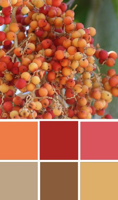 Warm Earthy Color Palette Earthy and warm orange