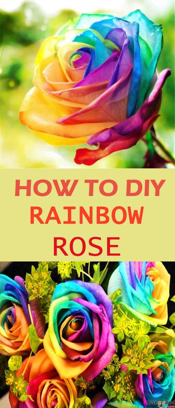 Best 25 rainbow roses ideas on pinterest rainbow for How to plant a rainbow rose seed