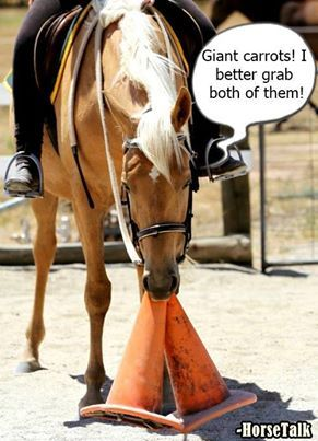 I can truly see our horses doing this...lol.