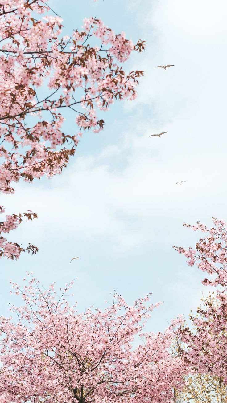 Blossom Poster Spring Digital Download Air Flowers Birds Rural Spring Colorful Vertical Cherry Blossom Wallpaper Flower Background Wallpaper Cherry Blossom Wallpaper Iphone