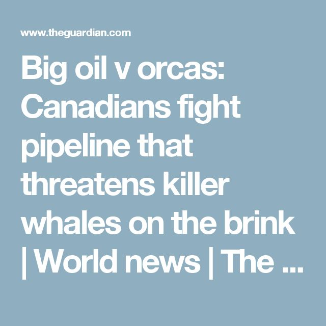 Big oil v orcas: Canadians fight pipeline that threatens killer whales on the brink | World news | The Guardian