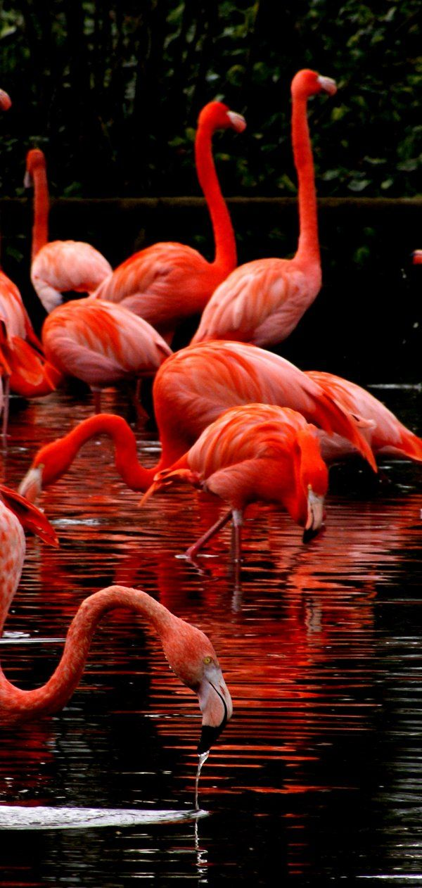 Flamingo's lake by Steveprice.deviantart.com on @deviantART