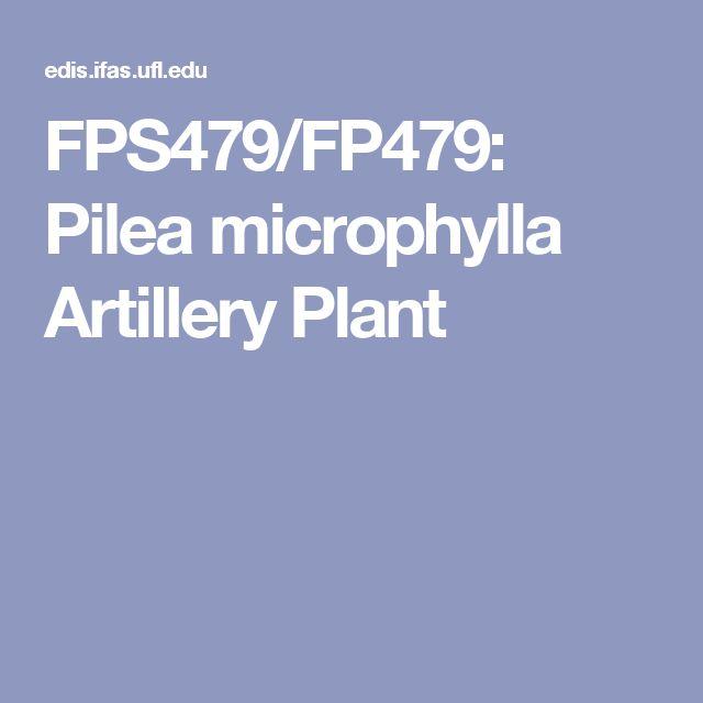 FPS479/FP479: Pilea microphylla Artillery Plant