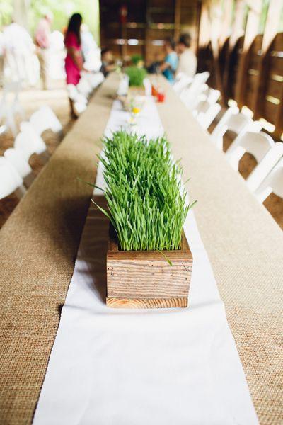 wheatgrass centerpiece | Mark Elkins #wedding
