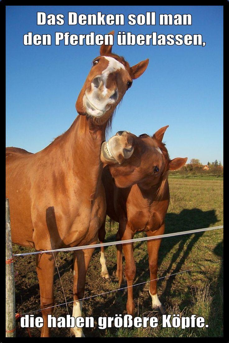 Das Denken soll man den Pferden überlassen LocoPengu – Why so serious? – Kleine Weisheiten
