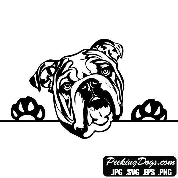 Beautiful English Bulldog Peeking Dog Designs Make Money Sell