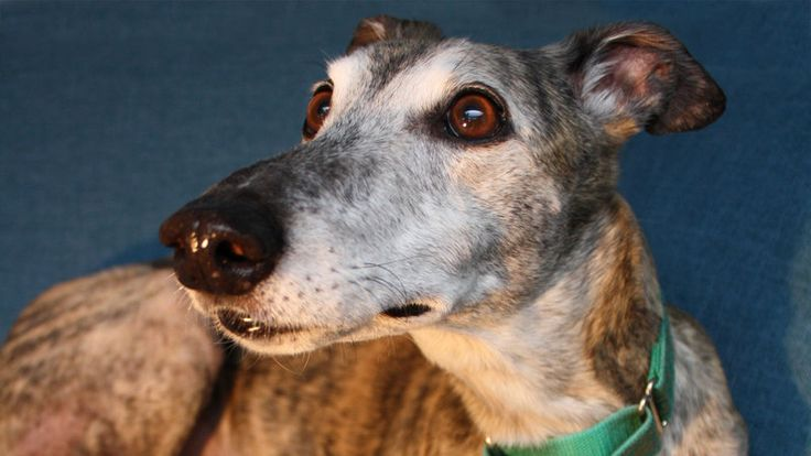 Petition https://www.change.org/p/alabama-governor-end-greyhound-racing-nationwide?utm_source=action_alert