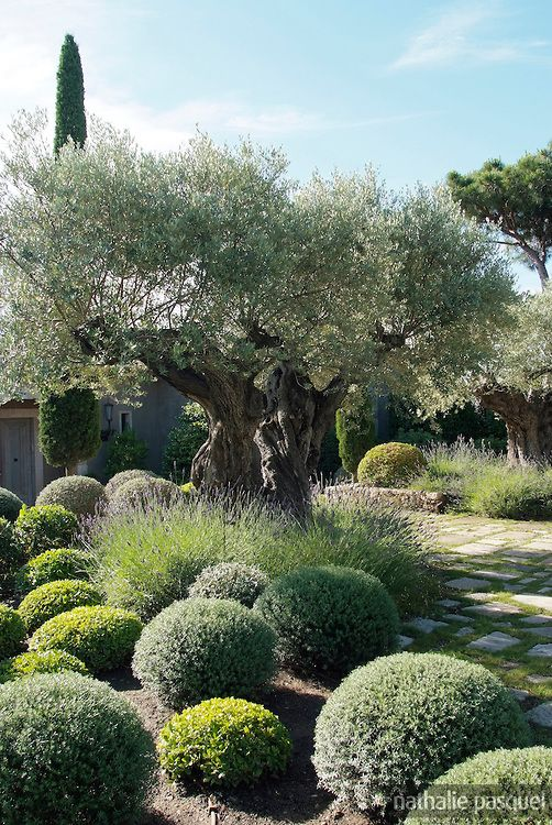 Mediterranean Garden Design Image Brilliant Review