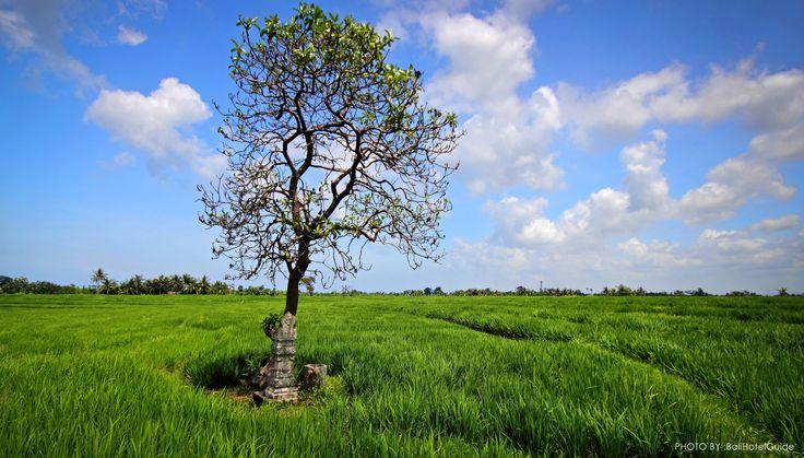 Canggu has become popular with many visitors who enjoy the somewhat rural atmosphere and slow pace this area offers while being relatively close to the dining, shopping and fun found in other parts of nearby South Bali.  Click on the link to learn more.  http://www.balihotelguide.com/Canggu.aspx