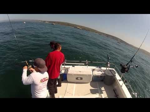 8 best videos norcal sportfishing adventures images on for Bodega bay fishing charters