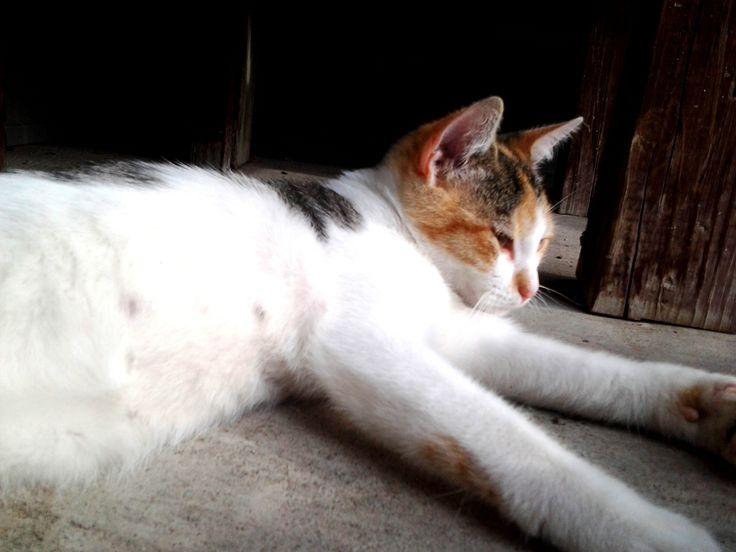 blood in cat urine stress