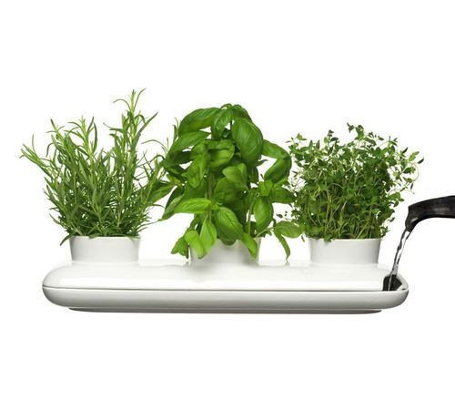 Herb pot from Swedish Sagaform: Herb Pots, Herbs Pots, Pots Trio, Indoor Herbs, Trio Herbs, Herbs Planters, Growing Herbs, Sagaform Herbs, Herbs Gardens