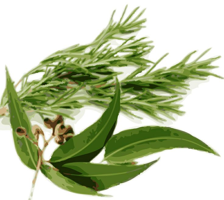 Herbal home remedies from Pinetree seeds blog