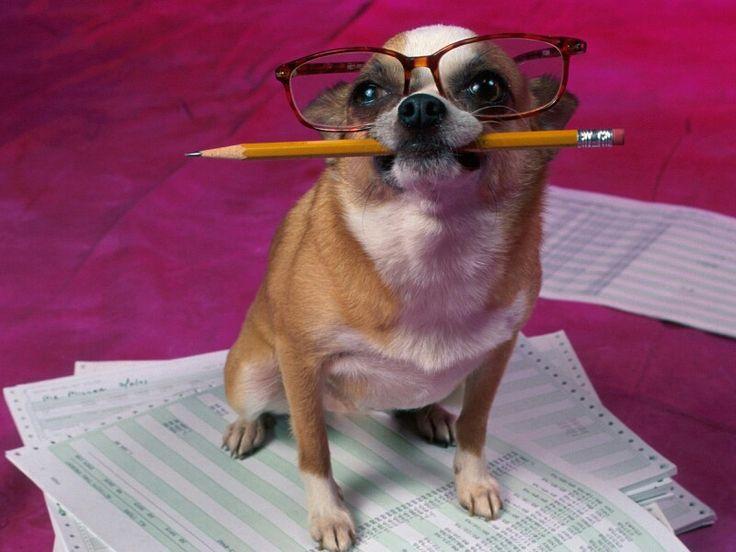 Dog no estudo :-)